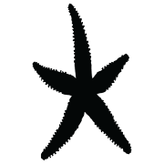 Placeholder starfish image